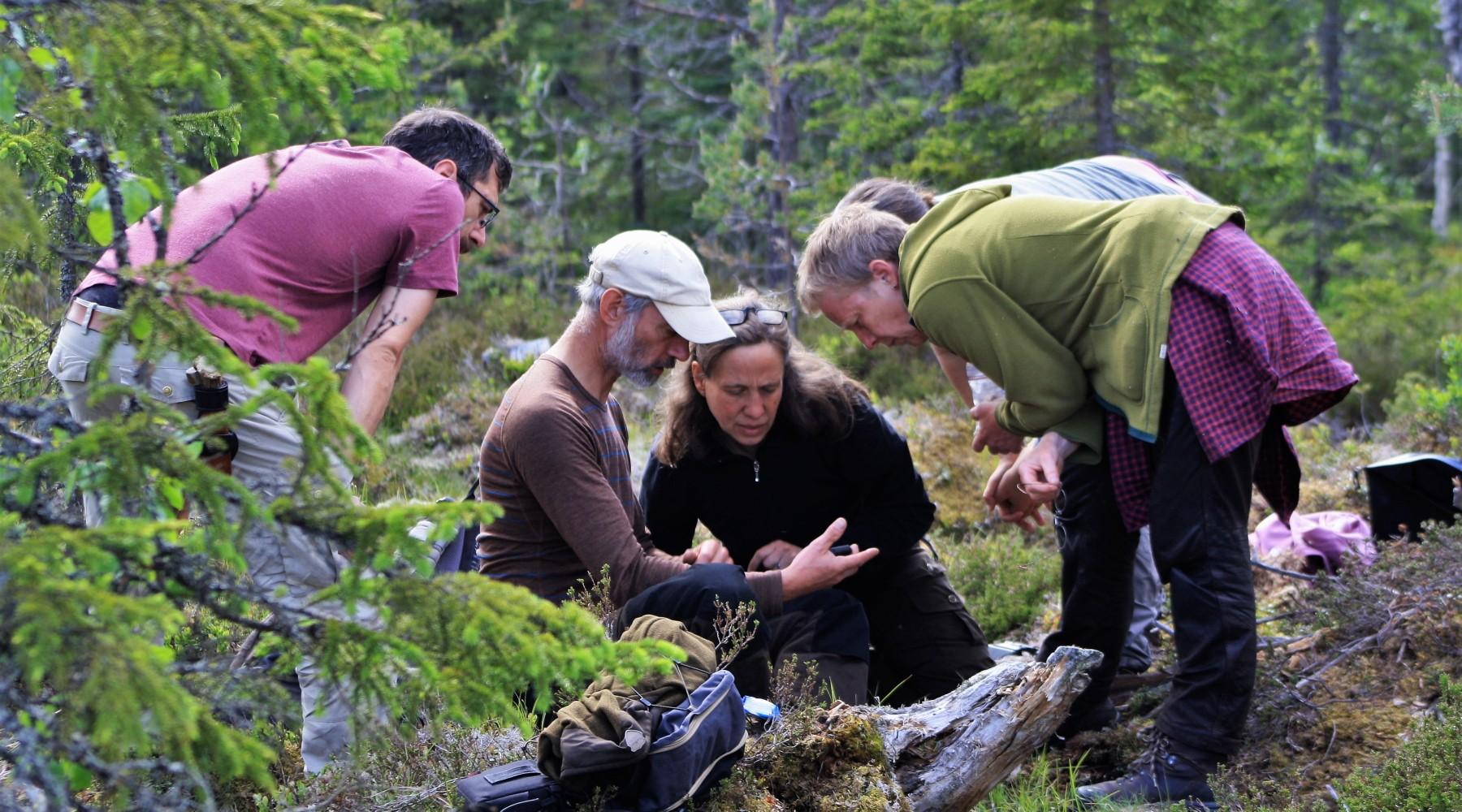 Naturkunde Exkursion: Braunbären