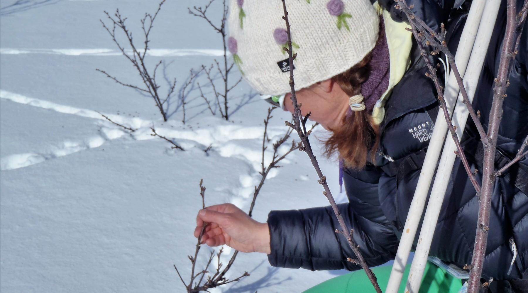 Skiwandern: Skilaufen in Norwegen (Bild)